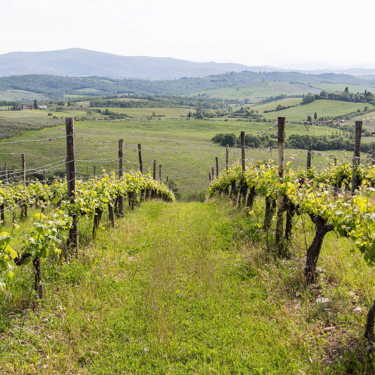 focuswein | Ihr kompetenter Partner für ausgezeichnete Weine aus Südtirol, Italien und Österreich