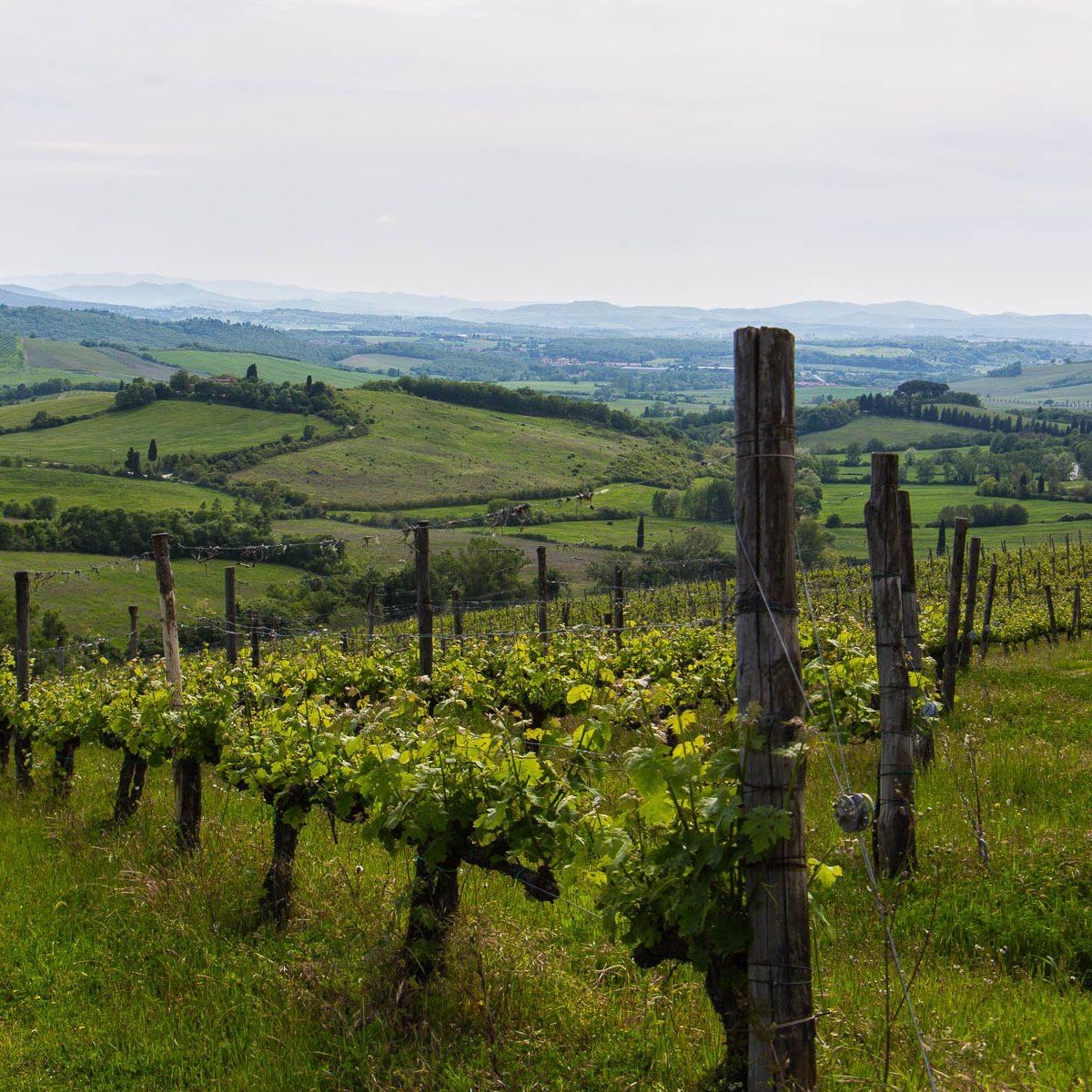 Ausgezeichnete Weine aus Südtirol, Italien und Österreich