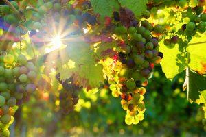 Weinmeisterschaft mit focuswein und Michaels Leitenberg